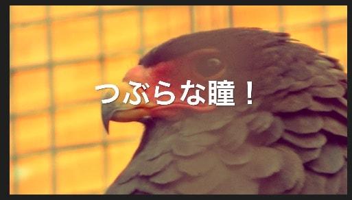 フィルタ適用後 設定画面フィルタボタン  動画編集ソフトiMovie'13(ver10)