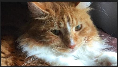 終了位置 ネコの顔にズームアップ KenBurnsの設定方法 動画編集ソフトiMovie'13(ver10)