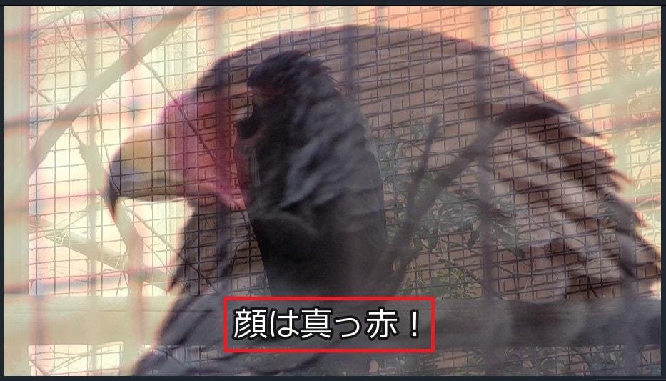 トランジションプレビュー 動画編集ソフト Filmora9(フィモーラ)